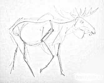 Схема строения лося