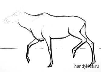 Рисуем туловище и ноги лося