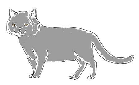 Рисунок Британская Кошка