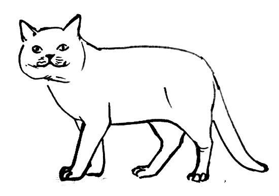 Раскраска Кошка