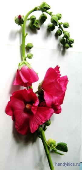 Мальва цветок