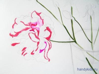 Нарисуем розу