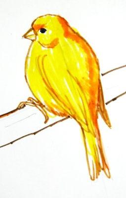 Рисунок канарейка