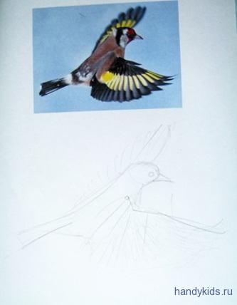 Как нарисовать летящего щегла