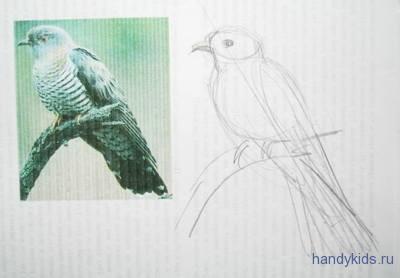 Как нарисовать кукушку