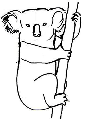 Рисунок-раскраска Коала