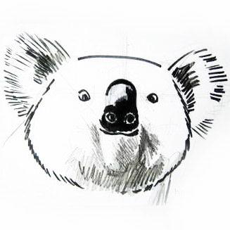 Голова коалы рисунок