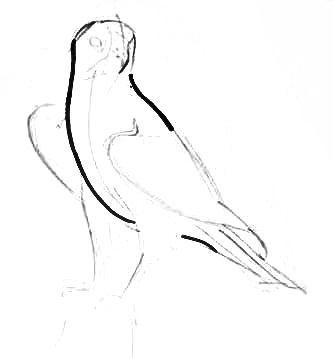 Рисуем сидящего сокола поэтапно