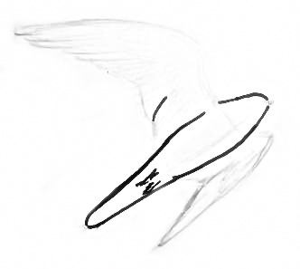 Нарисуем сокола в полёте