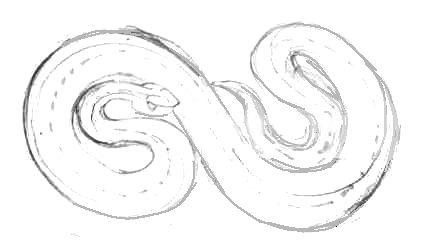 Как нарисовать змею гадюку
