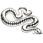 Как  красиво  нарисовать змею (змея)