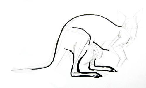 Поэтапный рисунок кенгуру