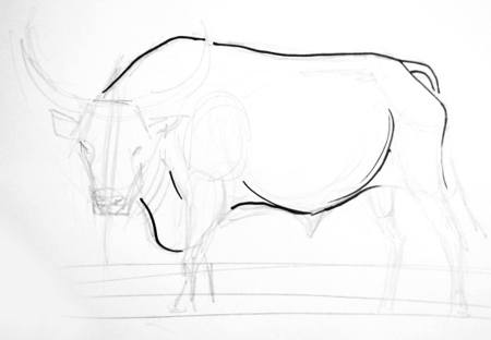 Рисуем туловище быка