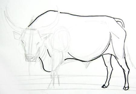 Рисуем быка поэтапно