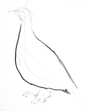 Рисуем тундровую куропатку