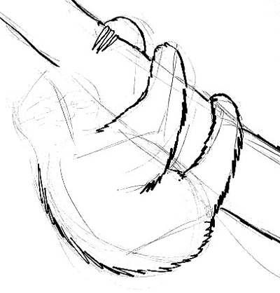 Рисуем ленивца поэтапно