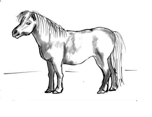 Выполним раскраску Пони.