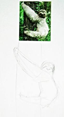Как нарисовать ленивца