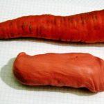 Лепка морковка
