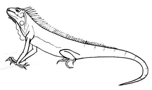 Как нарисовать Игуану