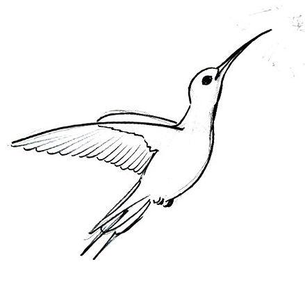Рисунок-раскраска Колибри