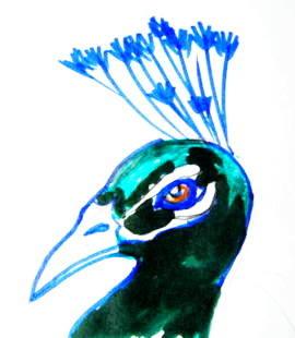 Голова павлина -рисунок в цвете
