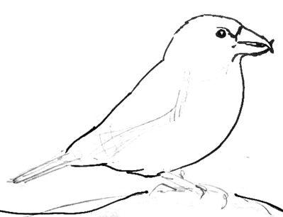 Урок рисования птицы клеста