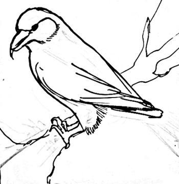 Урок поэтапного рисования клеста