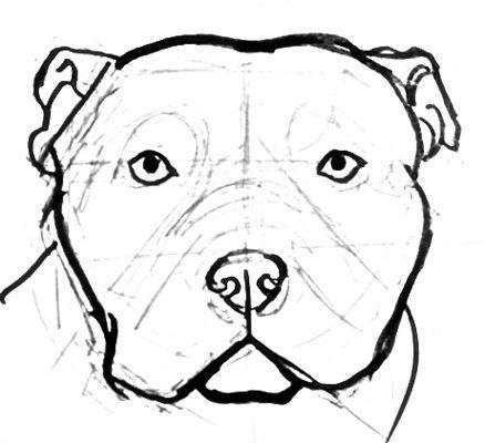 Рисунок голова питбуля