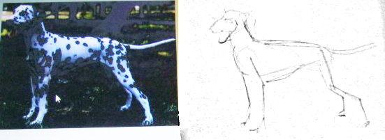 Как нарисовать далматина