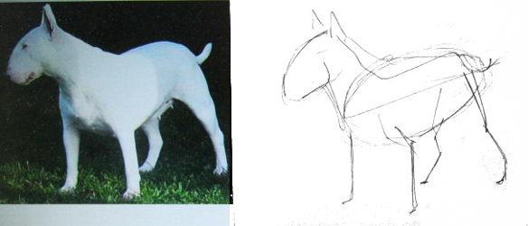 Как нарисовать бультерьера