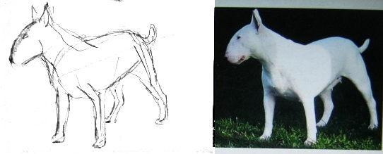 Как нарисовать собаку бультерьера