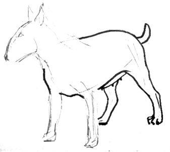 Рисуем бультерьера
