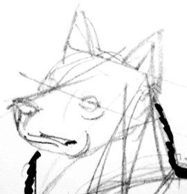 Как нарисовать голову лайки
