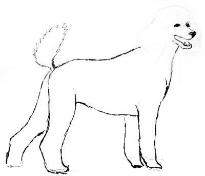 Рисуем собаку  пуделя поэтапно