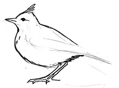 Урок поэтапного рисования жаворонка