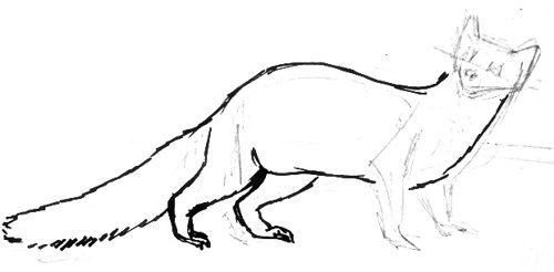 Урок рисования куницы