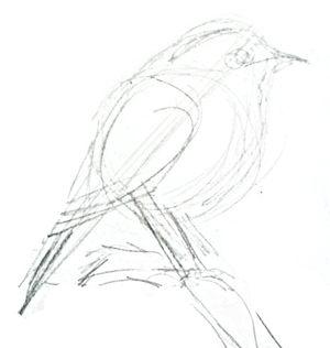Зарянка рисунок карандашом