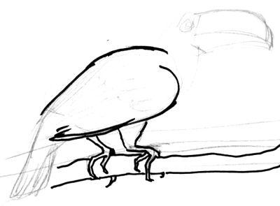 Нарисуем птицу Тукана