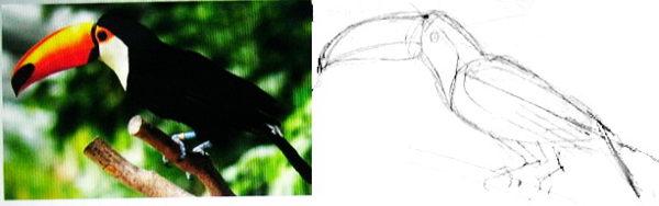 Как нарисовать Тукана