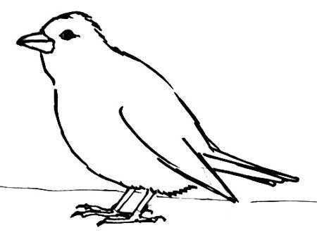 Урок поэтапного рисования Зяблика