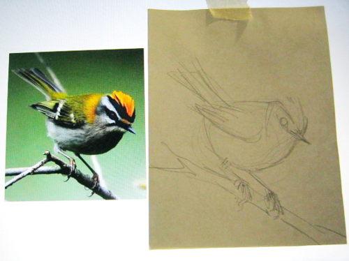 Как нарисовать птичку Королька