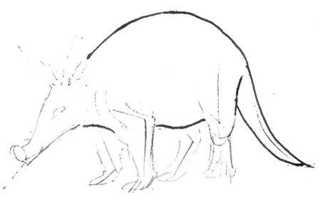 Рисуем трубкозуба поэтапно