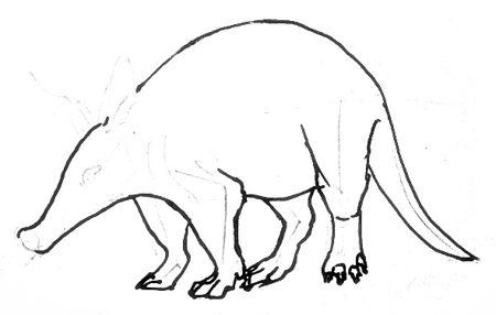 Нарисуем туловище и голову трубкозуба