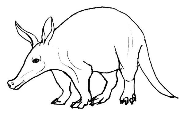 Рисунок -раскраска Трубкозуб