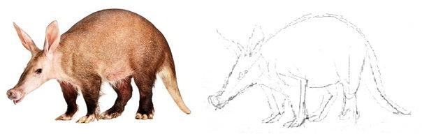 Рисуем трубкозуба