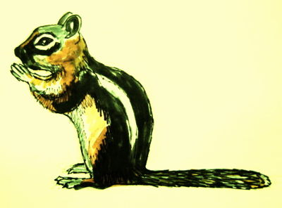 Рисунок Бурундук