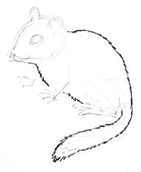 Урок рисования бурундука