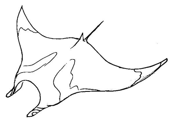 Манта рисунок