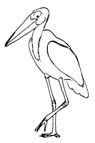 Рисунок - раскраска  Марабу